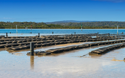 Riparian Property Rights vs Oyster Aquaculture