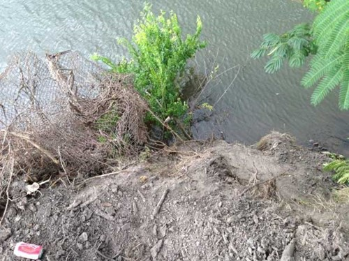 vegetation and loose dirt in the Elizabeth River
